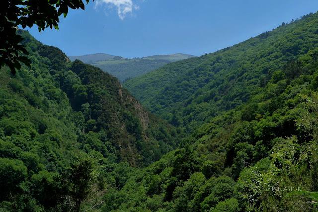 Bosques de Taramundi - Reserva de la Biosfera Oscos Eo