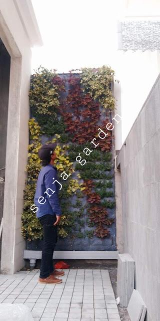 Tukang taman vertical malang