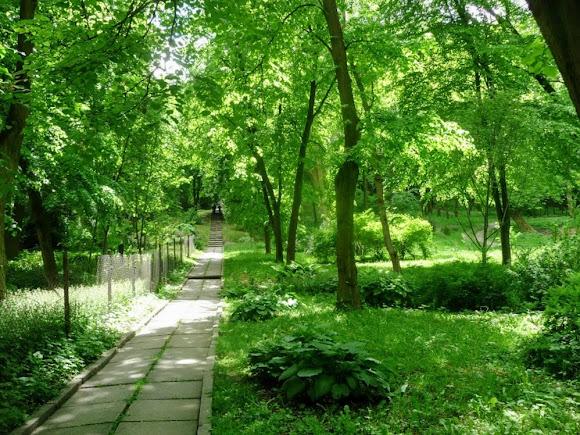 Львів. Ботанічний сад Лісотехнічного університету