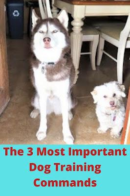 dog training commands, dog training tips, dog commands, dog safety, train my dog, how to train a dog