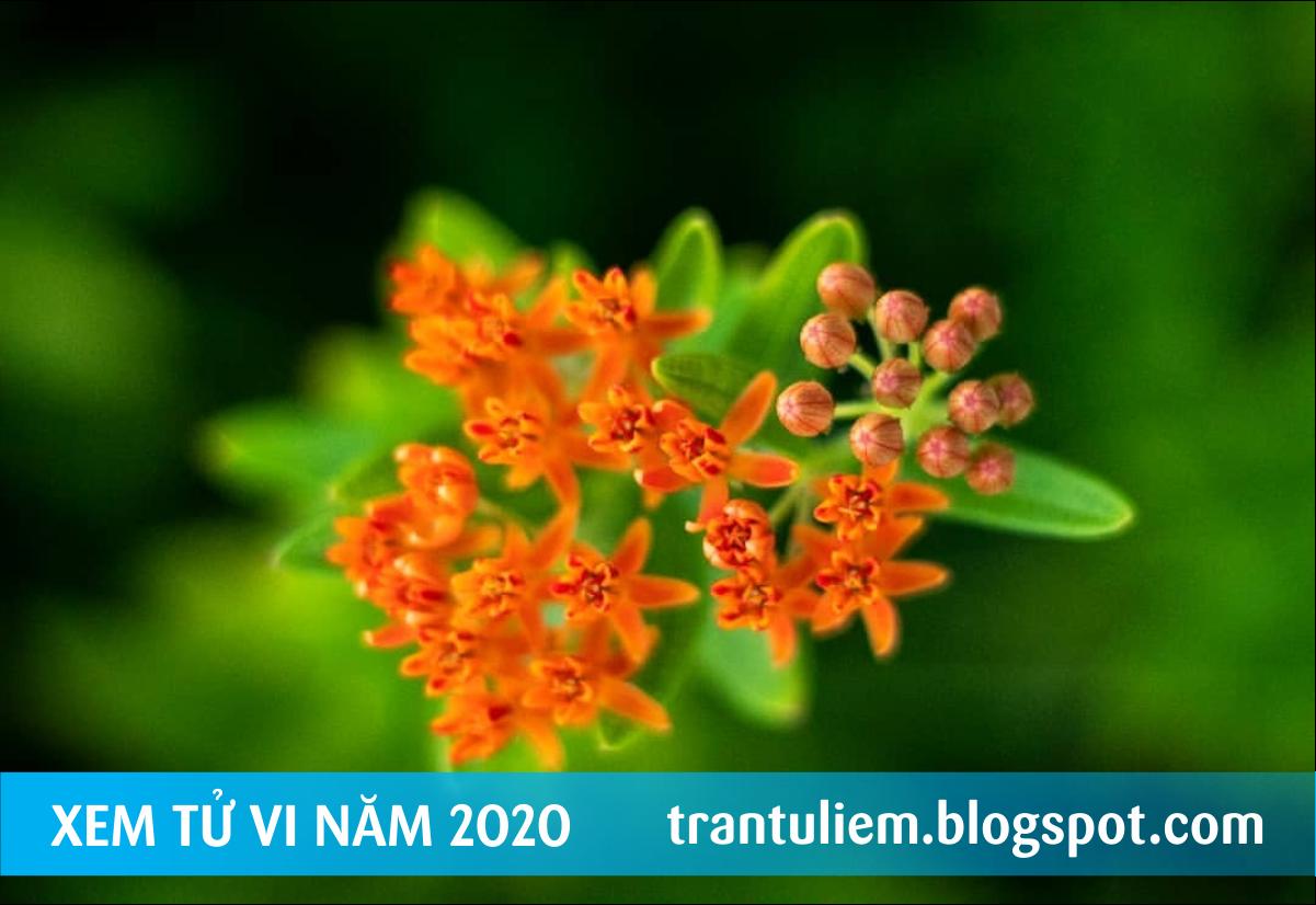 TỬ VI NĂM 2020