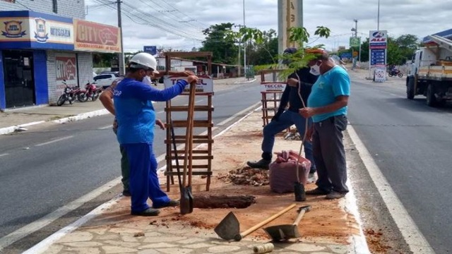 Prefeitura de Patos inicia projeto de arborização urbana
