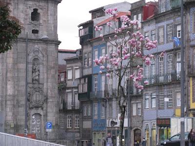 árvore de magnólias no Porto