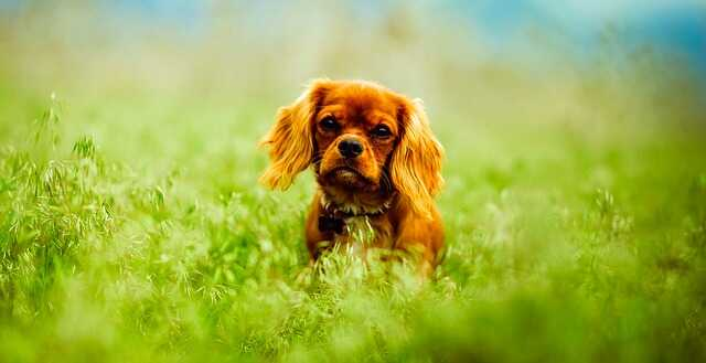 Very Cute Puppy Images HD