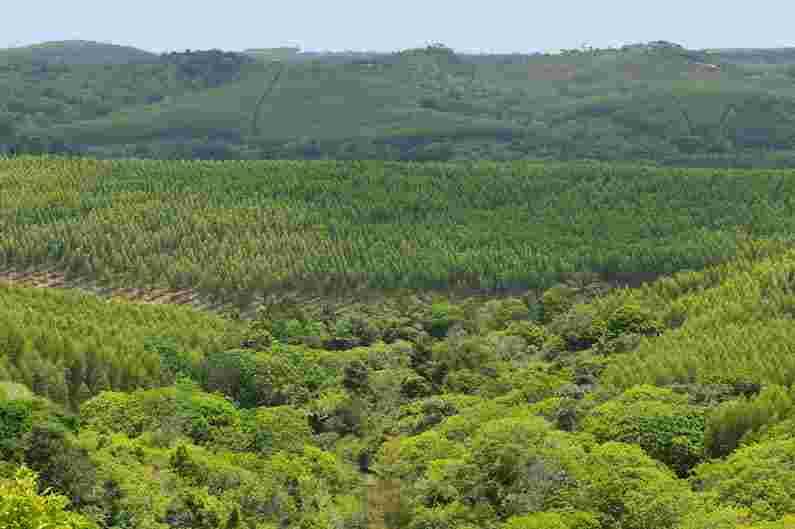 A preservação das florestas nativas tem sido tema constante quando a pauta é preservação do meio ambiente. Tanto é verdade que a Organização das Nações Unidas, em 2015, elencou 17 Objetivos de Desenvolvimento Sustentável onde assuntos relacionados à proteção ambiental foram colocados como metas que devem ser atingidas até 2030.