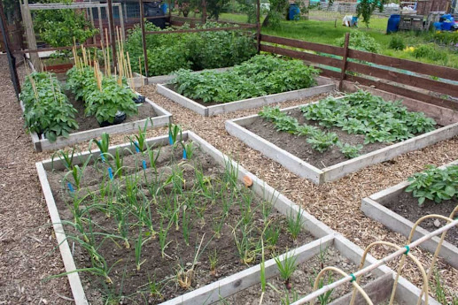 How to Start and Maintain a Vegetable Garden