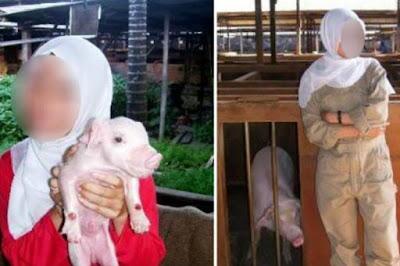 Masya Allah!!! Heboh Muslimah Gendong Babi Usai Dibully 8 Tahun, Ini Alasanya…