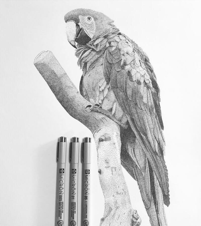 07-The-smart-parrot-Kelsey-Hammerton-www-designstack-co