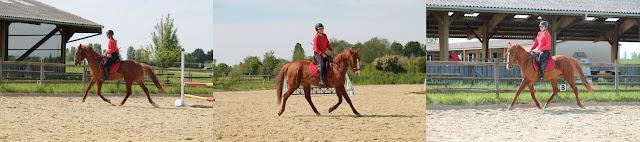 Effet du nose band sur un cheval qui ne supporte pas le mors.