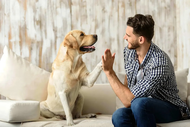 how do i know my dog loves me quiz how do i know if my dog loves me how do i know if my dog loves me quiz how do i know if my dog loves me back how do i know if my dog loves me or not how do i know if my dog loves me reddit how do i know my dog loves me the most how do i know my dog really loves me how do i know if my dog loves me the best how do i know if my dog loves me the most how do i know if my boxer dog loves me how can i tell that my dog loves me how can i know my dog loves me how can i know if my dog loves me how do i know when my dog loves me how do i know my.dog loves me how do i know my dog loves me how do i know if dog loves me how do i know a dog loves me how do i know how much my dog loves me how do i know if my dog likes me how do i make my dog love me how do i make my dog love me more how do i get my dog to love me more how do i make my dog love me again how do i make my dog love me wikihow how do i know of my dog loves me how to know if my dog loves me quiz how to tell if my dog loves me quiz how do i know my rescue dog loves me how do i know if my dog really loves me how do i know if my rescue dog loves me how to tell if my dog loves me reddit how to tell that my dog loves me how do u know my dog loves me how do u know if my dog loves me how will i know if my dog loves me how would i know if my dog loves me how do you know my dog loves me how do you know if my dog loves me