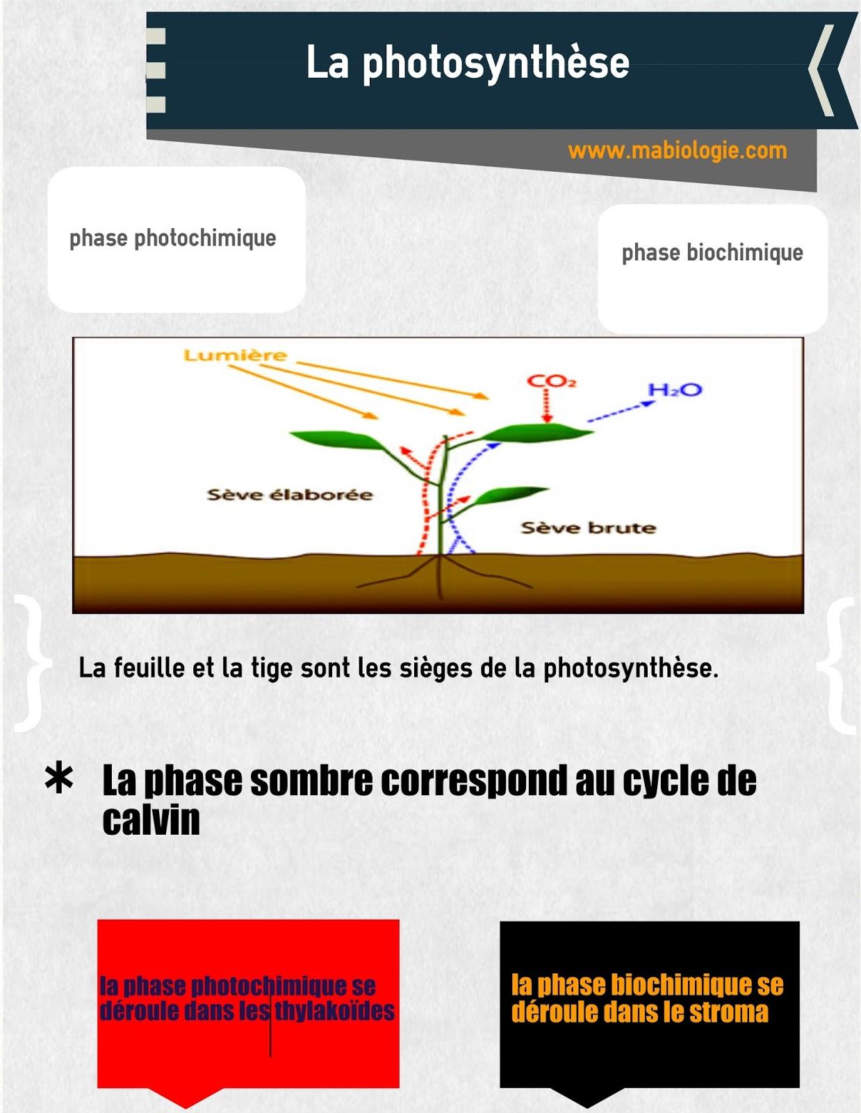 Définition photosynthèse