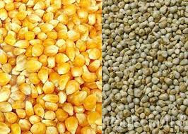 In the state farmers will get free seeds of Macca and bajra.