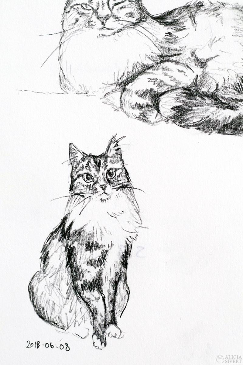 Teckningsutmaningen i juni, foto av Alicia Sivertsson. aliciasivert teckning teckningar teckna rita skiss skissa skapa skapande utmaning kreativitet skaparutmaning bloggutmaning månadsutmaning kreativ penna pennor blyertspennor blyertspenna katt katten vifslan