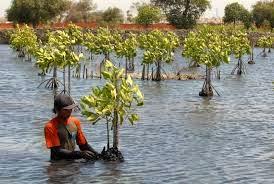 Pemanfaatan Lingkungan bagi Pembangunan Berkelanjutan