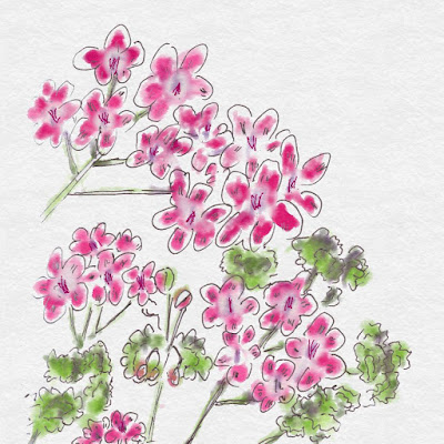 Digital Watercolour Painting of Pink Geraniums