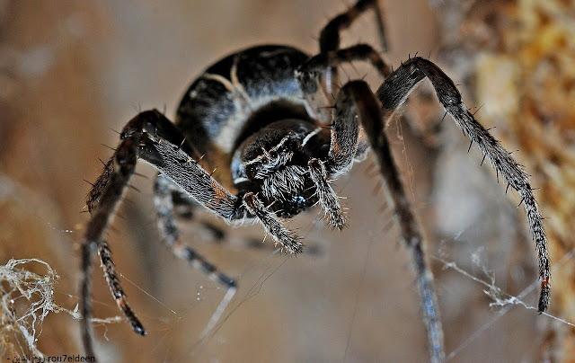 تفسير حلم العنكبوت الاسود للعزباء دلالات عجيبة ربما تعرفها لأول مرة