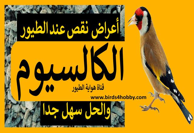 الكالسيوم اعراض نقص الكالسيوم عند الطيور و العناصر الغدائية التي توفر عنصر الكالسيوم للطيور