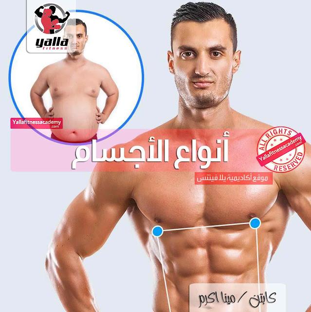 التغذية والتدريب حسب نوع الجسم | القصة كاملة