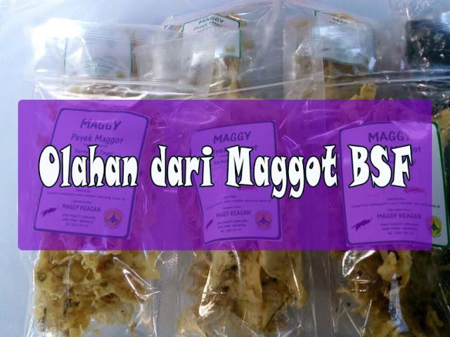 Maggot BSF di makan Manusia