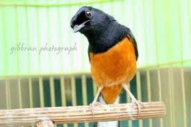 4 Cara Menjaga Kondisi Kesehatan Burung Kicau