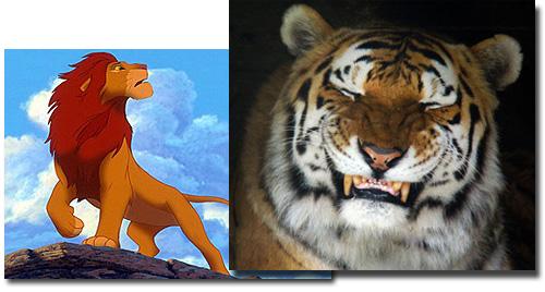 Leões - Rei da selva não