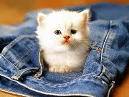 que-numero-soñar-si-sueño-con-gatos