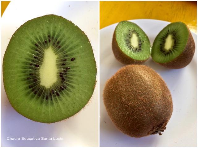 Kiwi cortado y entero - Chacra Educativa Santa Lucía