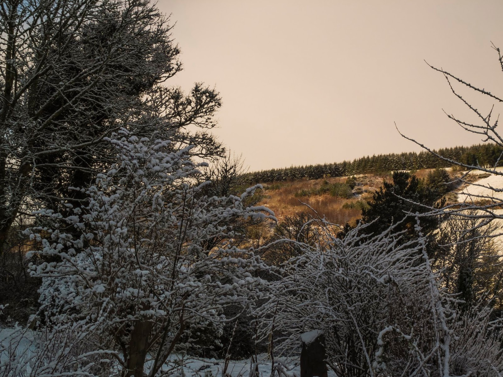 Snowy bushes in the foreground with a sunset hillside in the background.