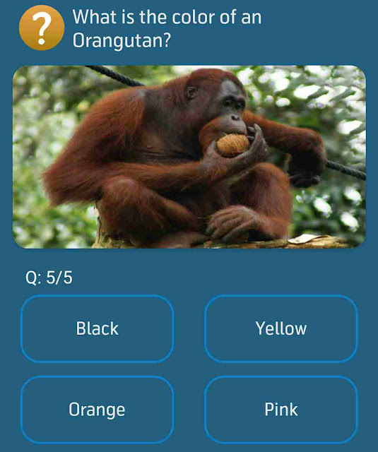 What is the color of an Orangutan?