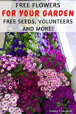 Flower plants grown from free seeds