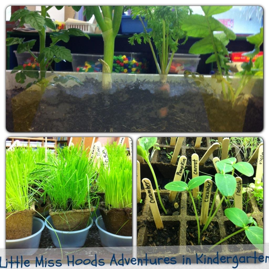 Little Miss Hood S Adventures In Kindergarten Plants