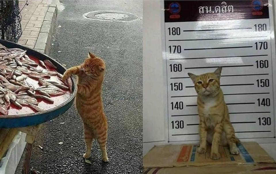 قط طريف