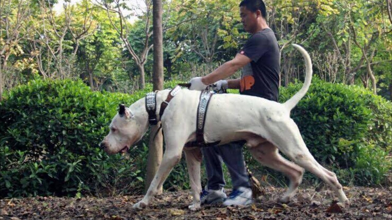 20 Best Indian Dog Breeds You Should Check Out 𝗨𝗟𝗧𝗜𝗠𝗔𝗧𝗘
