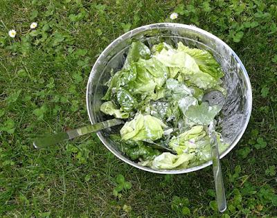 Grüner Salat mit Kräutern, Blüten und Joghurt-Dressing