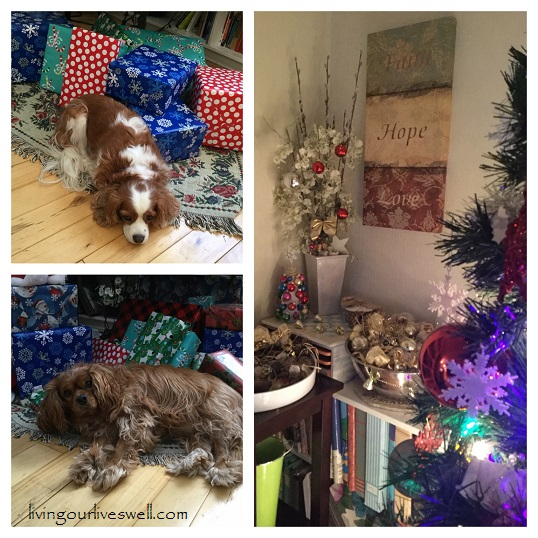 Our Cavalier King Charles Spaniels under the Christmas tree