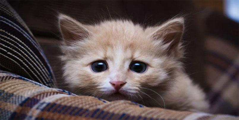 قصة تعذيب قطة,بعد الضجة الكبيرة.. الكشف عن قصة تعذيب قطة بشكل وحشي على يد فتاتين,Torture a cat,فيديو لفتاتين تقومان بتعذيب قطة صغيرة