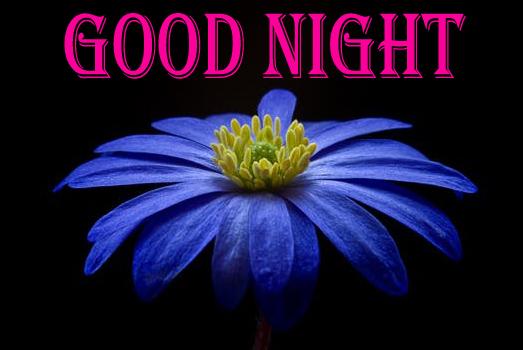 Beautiful Night With Flowers