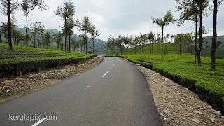 Road between tea estates, Valparai