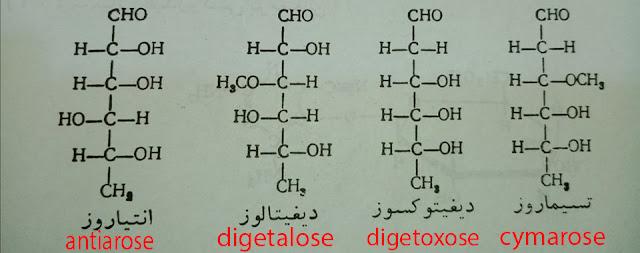 التسيماروزcymarose وَ الديغيتوكسوز digetoxose وَ ديغيتالوزdigetalose وَ انتياروز antiarose