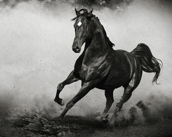 sonhei com cavalo significado