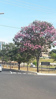 Parque Sabiá Uberlândia