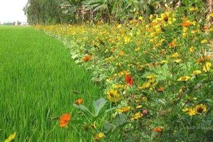 Tanaman Hias Bunga Yang Ada Di Alam Liar
