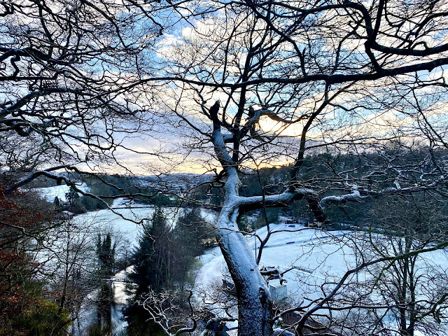 Snow covered tree overhanging a river banking - winter in the Borders, Scotland, UK - during the 2021 lockdown