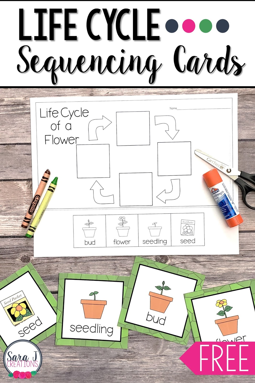 Learning about the life cycle of a bee, flower, butterfly, and frog with these free printables! Practice sequencing the life cycle with these cards and then complete a cut and glue activity.