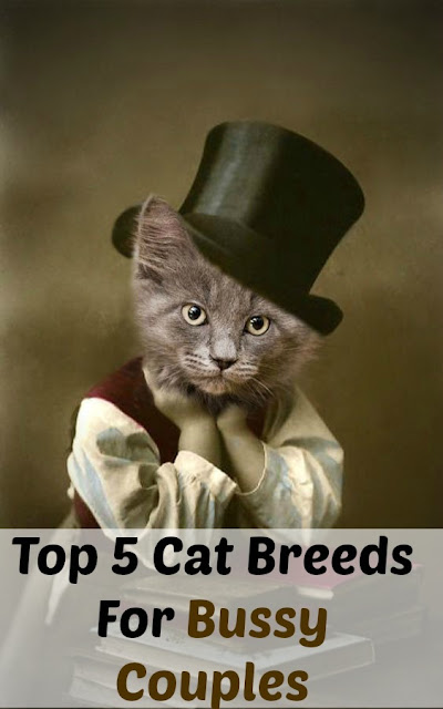 Top 5 Cat Breeds For Bussy Couples