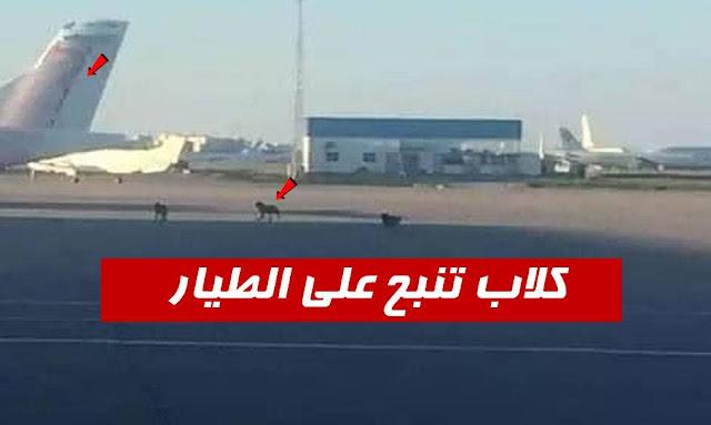 كلاب تنبح على الطيارة في مطار تونس قرطاج