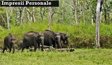 elefanti-sudul-Indiei-impresii