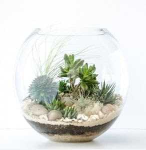 http://happyplaceterrariums.com.au/product/classic-coast/