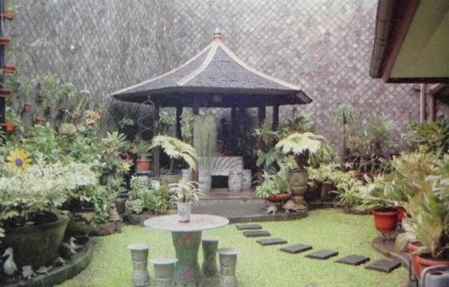 Aglaonema Penghias Taman Dan Pekarangan Rumah