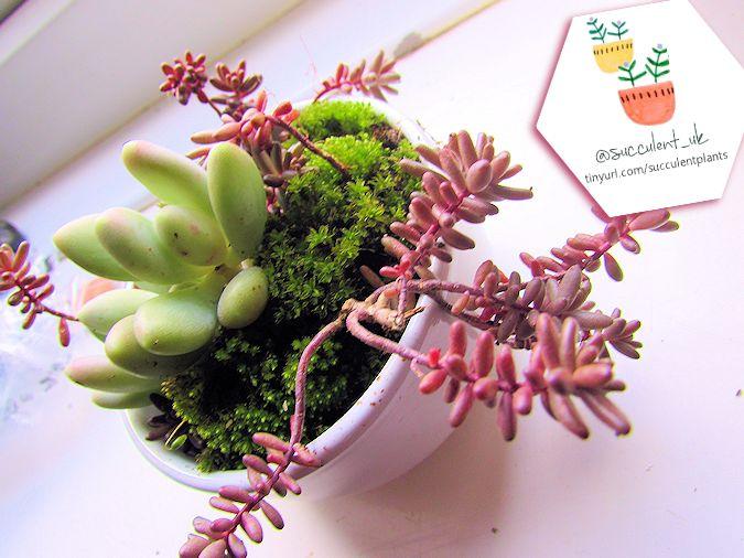 Indoor Succulent Planting Ideas For Inspiration Succulent Plants Uk
